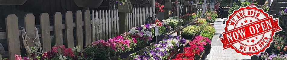 Contact Olde Saratoga Home And Garden Flowers And Vegetables